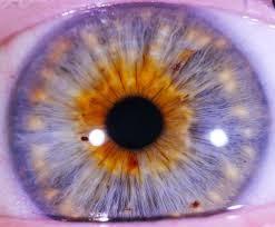 iridology at green door health