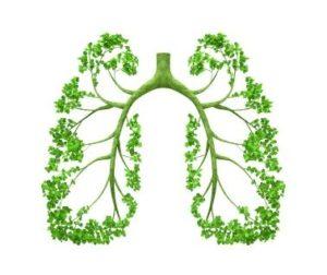 Smoke, Respiratory Health & My Favourite Herbs!